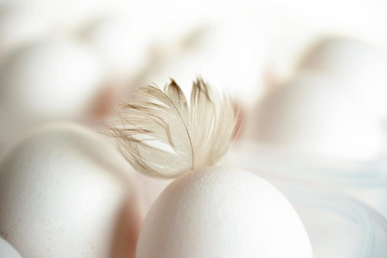 Oczyszczanie jajem – jajkowanie