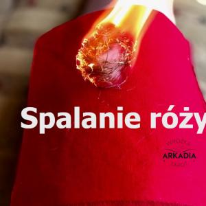 spalanie róży - wróżka Arkadia