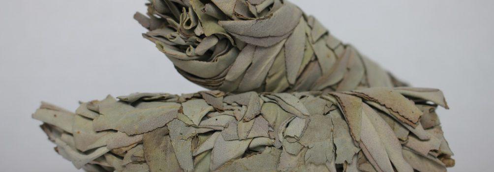 Biała szałwia – magiczne rośliny